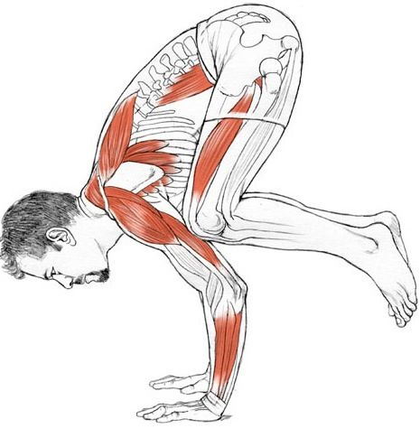 yoga anatomy in hindi pdf