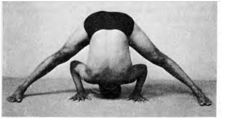prasarita padottanasana wide legged forward bend pose