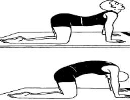 marjaryasanacatcow pose  karuna yogabest yoga teacher